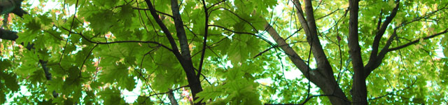 green-tree-leaves.jpg